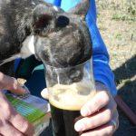 Green Hedonist Dog...